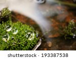 water drops on moss | Shutterstock . vector #193387538