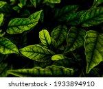 Beautiful Abstract Green...
