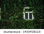 Nature Background White Window...