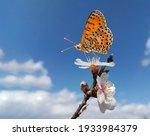 Butterfly On Almond Almods Tree ...
