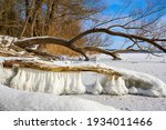 Frozen Lake With Willows On A ...