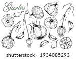 garlic. set of hand drawn... | Shutterstock .eps vector #1934085293