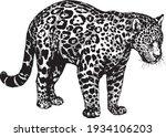 vector panther jaguar wild cats ... | Shutterstock .eps vector #1934106203