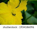Flower Yellow Sky Garden Blue