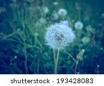 vintage photo of dandelions | Shutterstock . vector #193428083