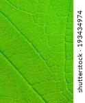 leaf texture   Shutterstock . vector #193434974