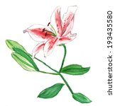 a watercolour lily on white... | Shutterstock . vector #193435580