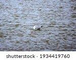 Beautiful White Seagulls...