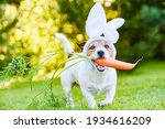 Dog With Carrot Wearing Bunny...