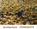 Squirrel On The Grass On Autumn