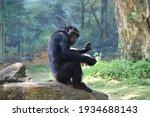 Beautiful Gorilla On The Stone...