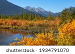 Colorful Autumn Trees And...