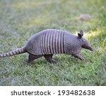 armadillo walking in florida... | Shutterstock . vector #193482638
