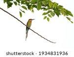 beautiful merops philippinus... | Shutterstock . vector #1934831936