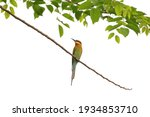 beautiful merops philippinus... | Shutterstock . vector #1934853710