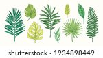 collection of tropical plants... | Shutterstock .eps vector #1934898449