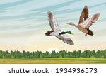 mallard ducks fly in the spring ... | Shutterstock .eps vector #1934936573