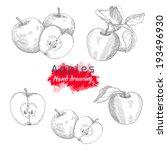 apples  vector hand drawing | Shutterstock .eps vector #193496930