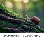 A Slow Grape Snail Crawls Up...