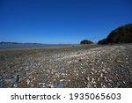 Shells Washed Ashore At Low Tide