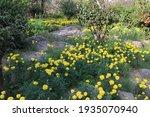 Beautiful Yellow Flowers...