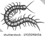 engrave isolated centipede hand ... | Shutterstock .eps vector #1935098456