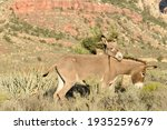 A Wild Burro Rest His Head Upon ...