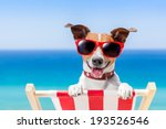 dog relaxing on a fancy deck... | Shutterstock . vector #193526546