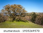 An Old Tree On A Hilltop With A ...