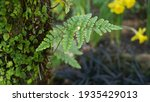 Fern Leaf  Moss And Tree Bark...
