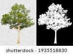 Tree On Transparent Background...
