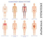 Cartoon Human Body Organs...