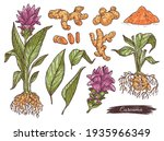 hand drawn set turmeric or... | Shutterstock .eps vector #1935966349