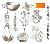 aromatherapy,art,berry,bitter,botany,calendula,chamomile,drawing,drawn,drug,elecampane,extract,floral,flower,garden