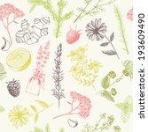 aromatherapy,art,bitter,blackberry,botany,calendula,chamomile,citrus,drawing,drawn,drug,elecampane,extract,floral,garden