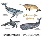 Watercolor Whales Set  Sea And...