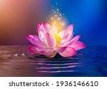 Lotus Pink Light Purple...