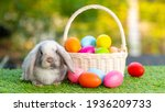 Lovely Bunny Easter Fluffy Baby ...