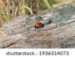 The Ladybug Is Walking Along...