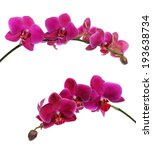 Purple Orchid On Black