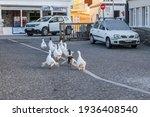 Small photo of Paros, Greece - September 27, 2020: A gaggle of white geese on the street in Naoussa on Paros island, Greece