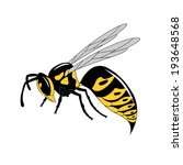 realistic wasp - stock vector