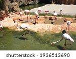 Large Group Of Pink Flamingo...