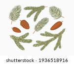 conifer branches vector... | Shutterstock .eps vector #1936518916