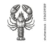 Drawing Of Lobster For Menu Or...