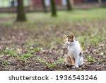 Cute Tabby Cat In Park. Lazy...