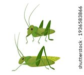 green insect on a white... | Shutterstock .eps vector #1936583866