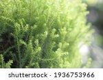 beautiful green background....   Shutterstock . vector #1936753966