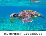 Sea Turtle Portrait Photo In...