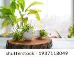 Microgreens In The Eggshells On ...